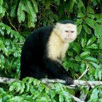 Gamboa Rain Forest